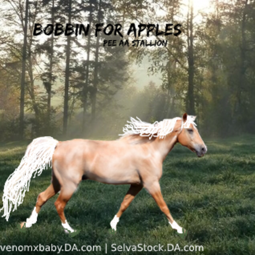Bobbin for Apples 500x500