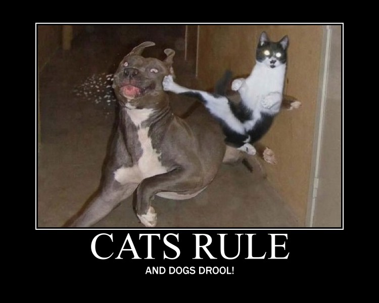 Dogs and cats diary... Cats_Rule_by_FatGiraffe77