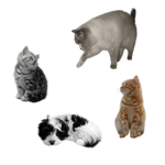 puppy and cats FREE png stock