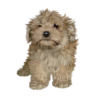 FREE Puppy png stock by JaneEden