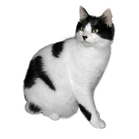 Black and white cat FREE png stock by JaneEden