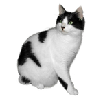 Black and white cat FREE png stock