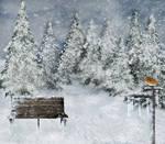 winter02 background stock