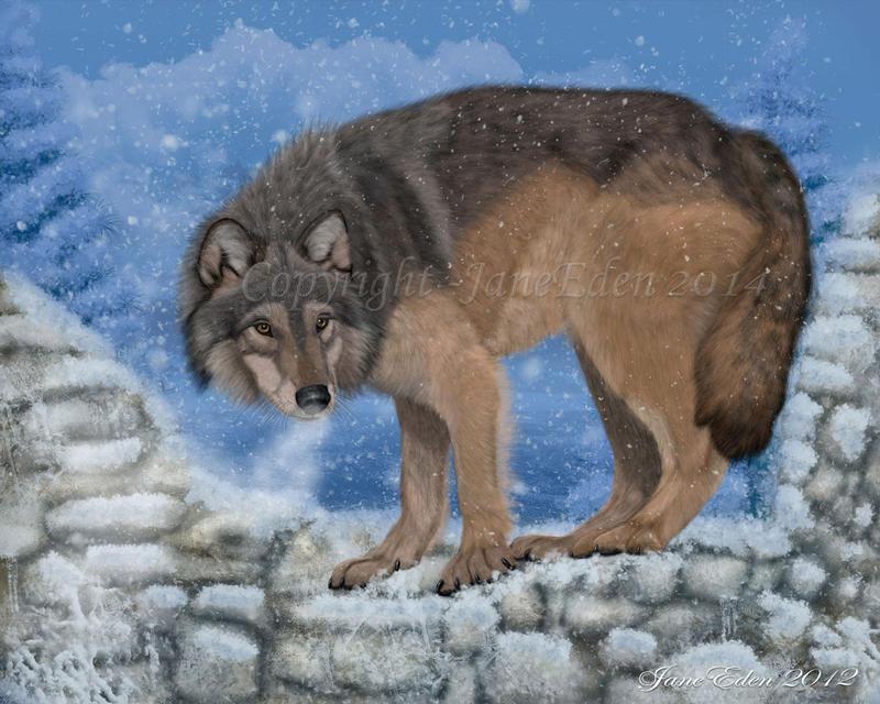 Lone-Wolf- by JaneEden