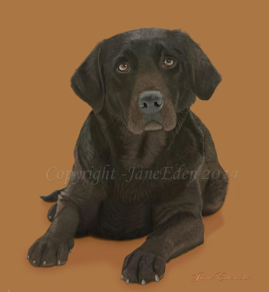 Chocolate Labrador Retriever by JaneEden