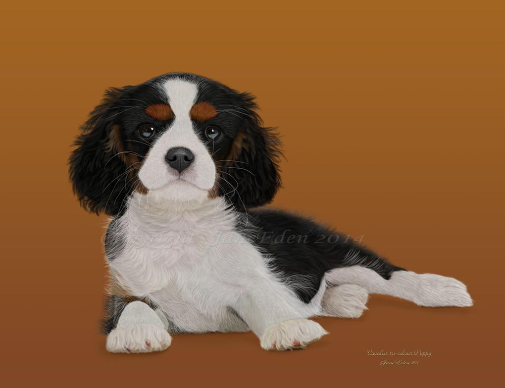 Cavalier-tricolour-puppy- by JaneEden