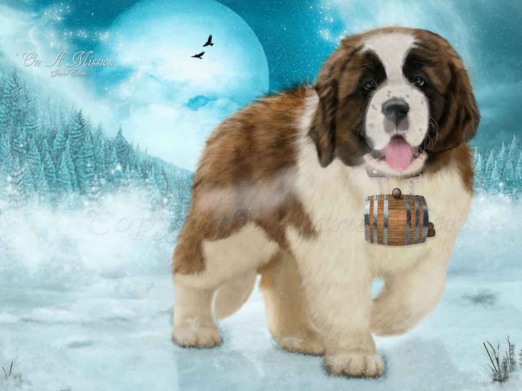 On-a-Mission-St-Bernard by JaneEden