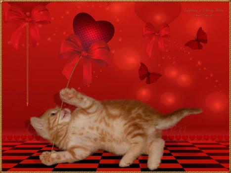 Valentine--Cheeky-Kitten