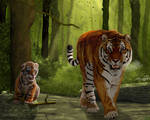 Tigers in Siberian Forest