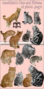 JaneEden's Cats and Kittens - stock