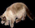 Adult Cat free stock by JaneEden