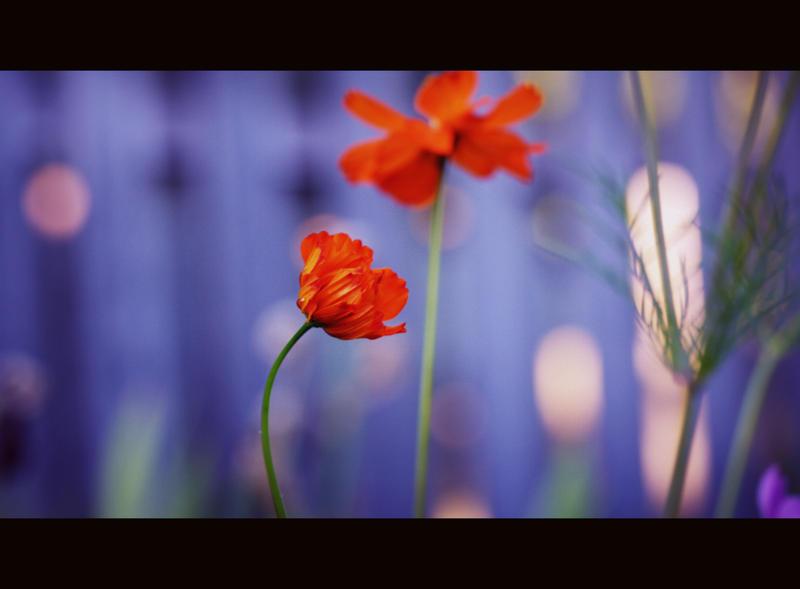 weeks_0913 by sjfbetty