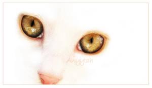 Cat by Anyytah