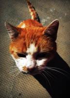 Cat. by Anyytah