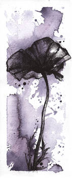..poppy.. by Anyytah