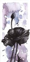 ...poppy... by Anyytah