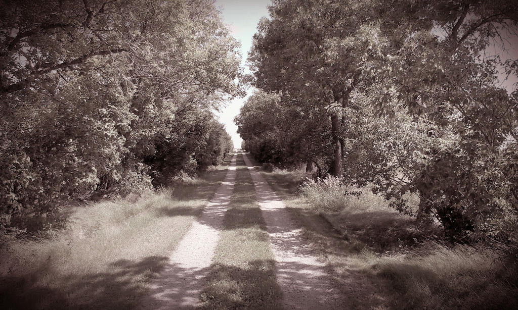 Olde Tyme Country Road by applefish
