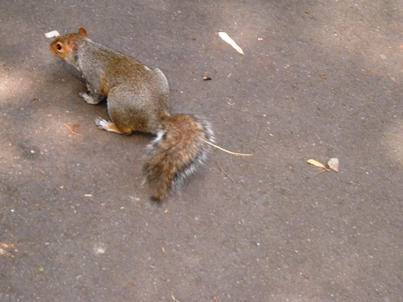 Squirrel At Taylor Park by Mandeze-Whitefang