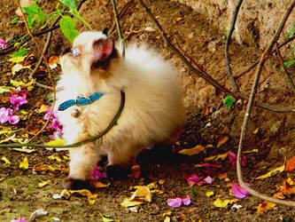 My fluffy cat by Pchann