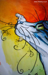 Whimsy Whiskers - A Close up