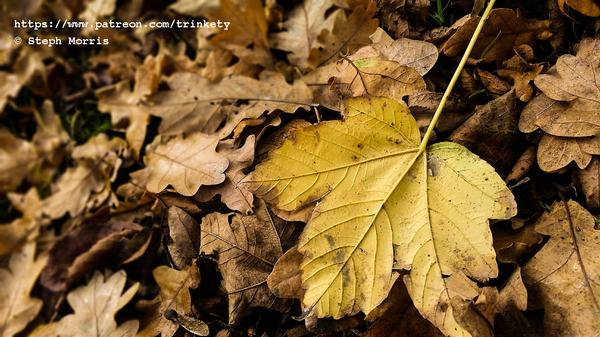 Lost Yellow Leaf by Trinkety