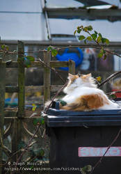 Fluffy Bin Cat - Not My Cat Project