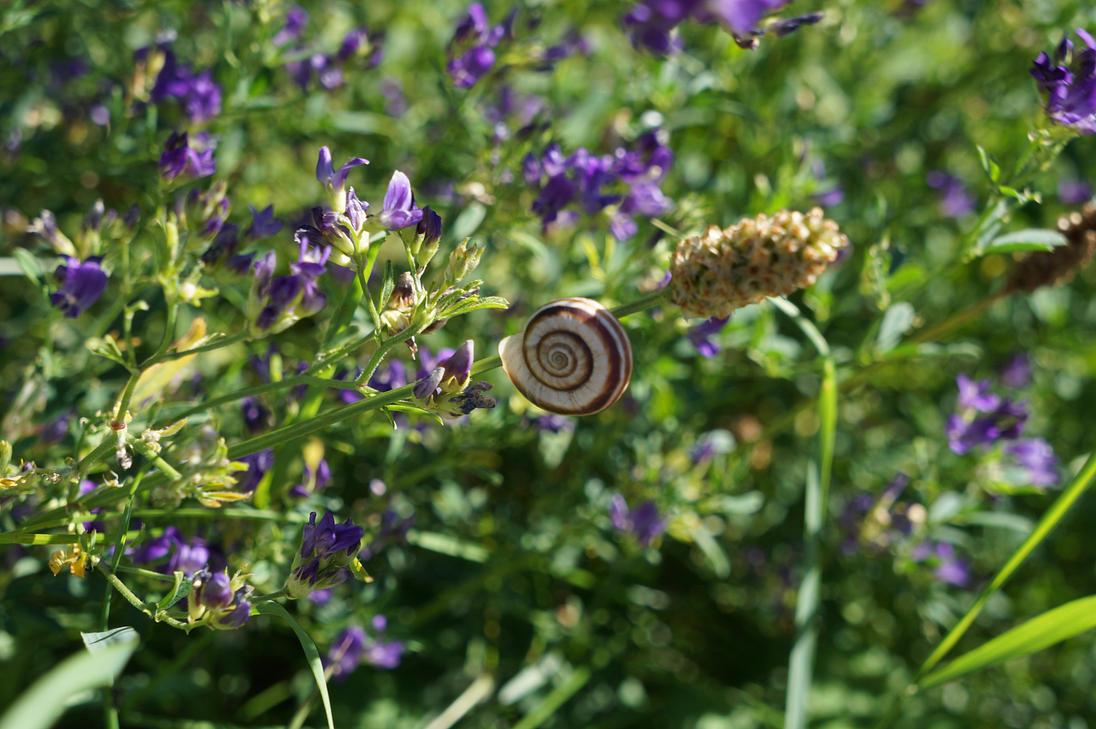 Nano Snail by glass-eater