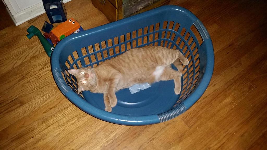 Basket Case by wondergirl100