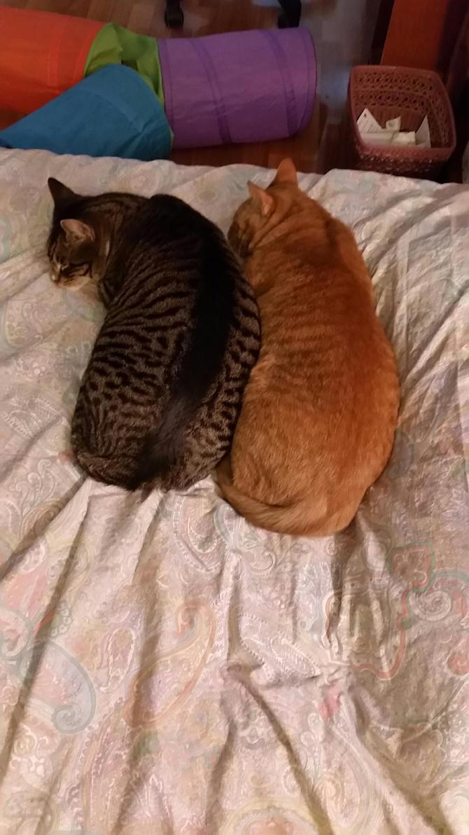 Snuggle Buddies by wondergirl100