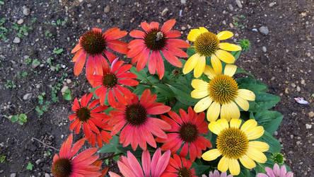 Bumblebee With Flowers by wondergirl100
