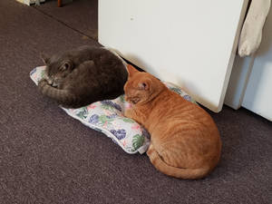 Dusty and Marty sleeping together