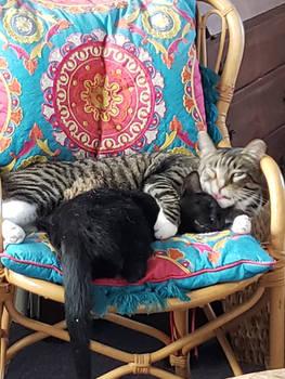 Chair Buddies