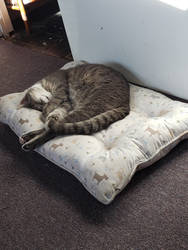 Dusty Curled Up