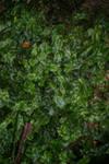 Lichen stock for texture