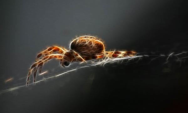 Spider Stock