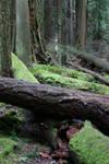 Fallentree stock