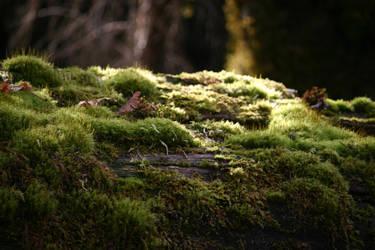 Moss stock 6