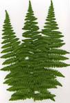 Scanned fern stock