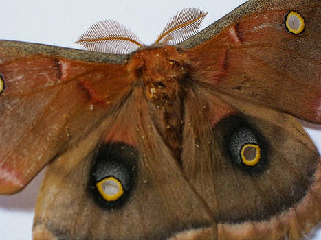 Moth stock 3