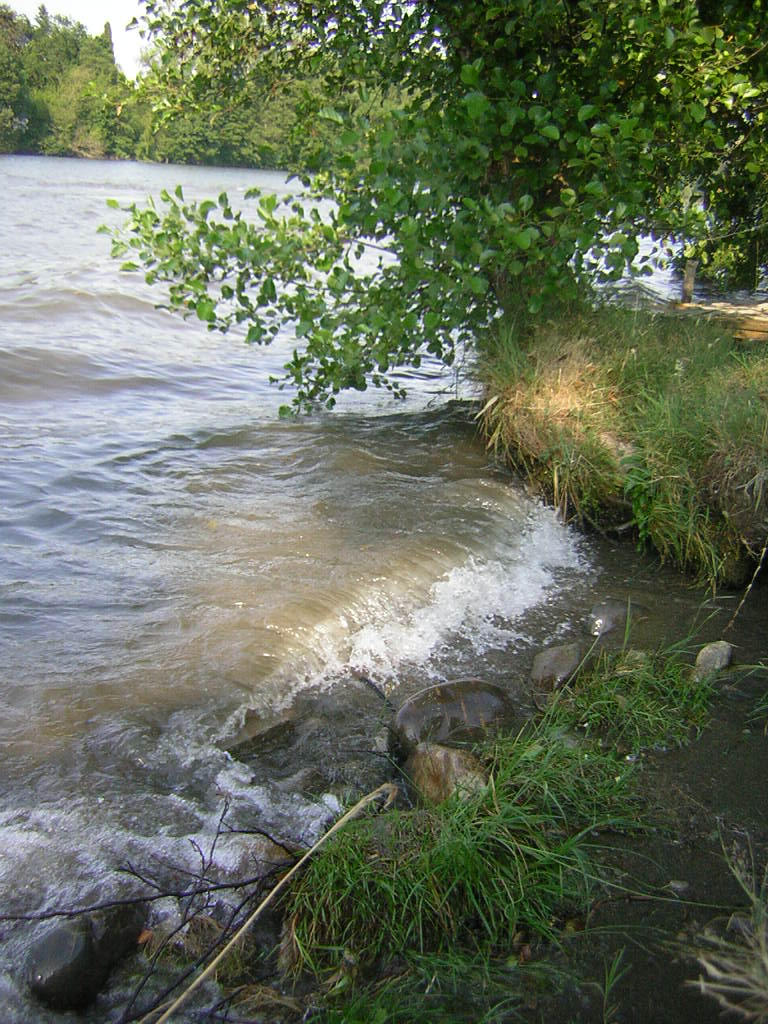 water by littlegreencow