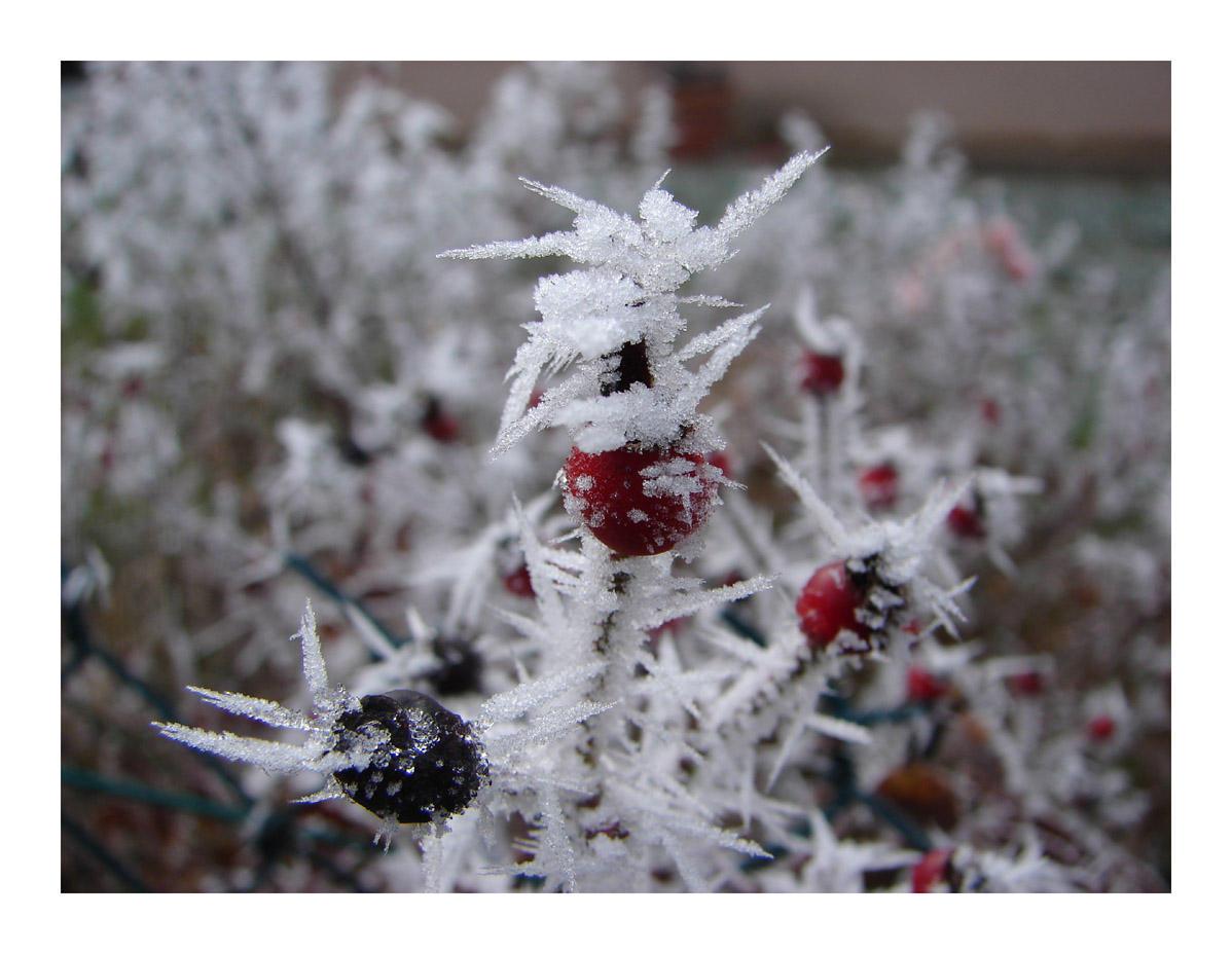 Winter by littlegreencow