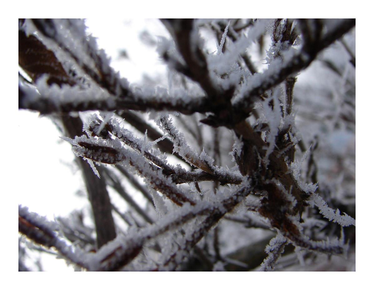 winter II by littlegreencow