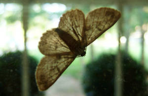 Moth by courtleigh