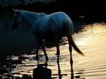 Unicorn by madhubuti