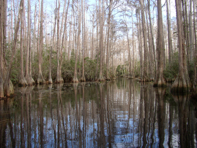 Okefenokee 2 by ringwraith10