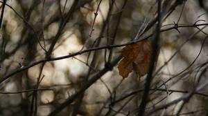 Autumn. Yet.