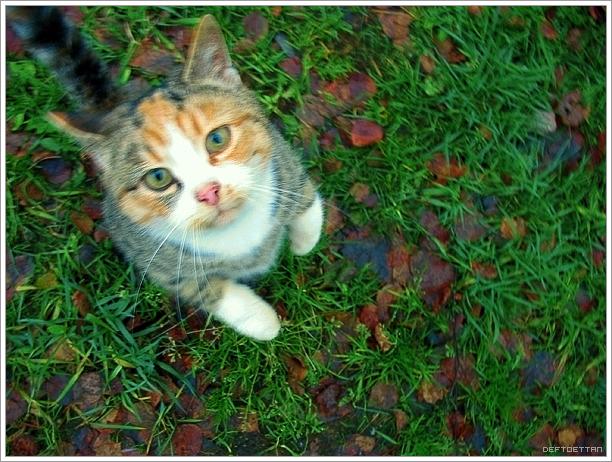 Cat Food Nature Variety Instinct