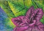 Scratch Art Flower by kimberly-castello