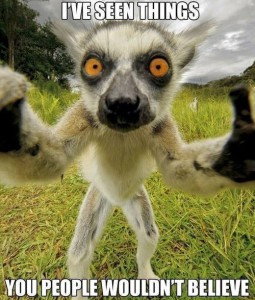 ReallyRowdyLion's Profile Picture