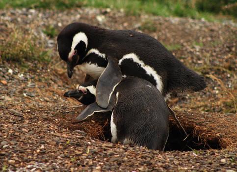 More Penguins